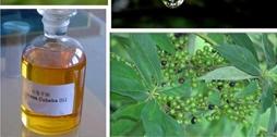 关于山苍籽油